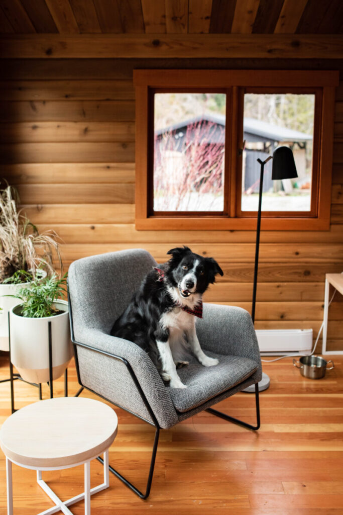 Motel room with dog in chair and wood accents